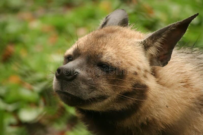 动物画象 免版税库存照片