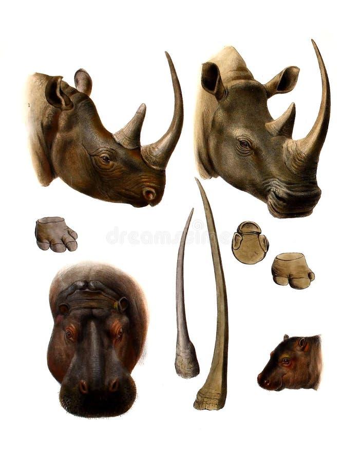 动物的例证 皇族释放例证