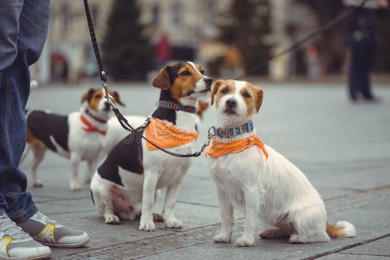 动物的保护的竞选 免版税库存照片