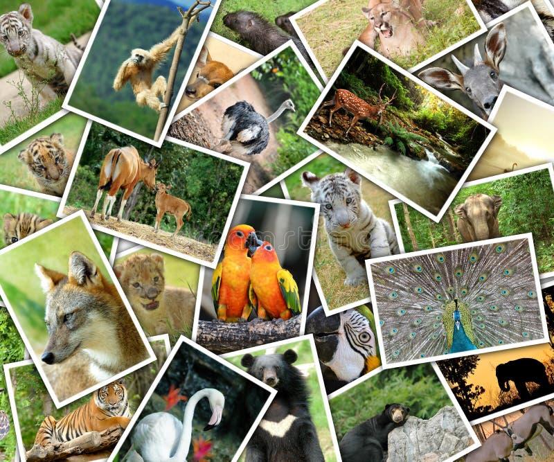 动物的图片 免版税库存照片