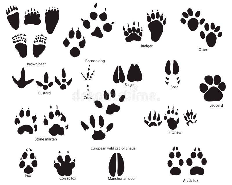 动物称谓线索 库存例证