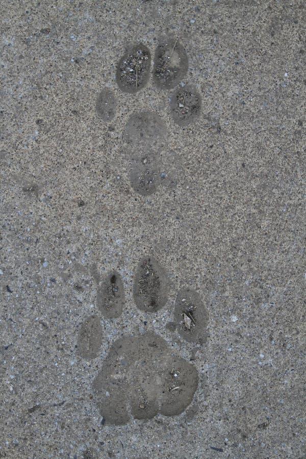 Download 动物脚印刷品 库存例证. 插画 包括有 猎犬, 动画片, 敌意, 生活, 印象, 标记, 图象, 查出, 背包 - 30329945