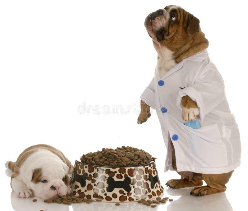 动物营养品 图库摄影