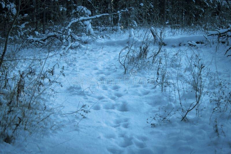 动物踪影在足迹的 库存图片