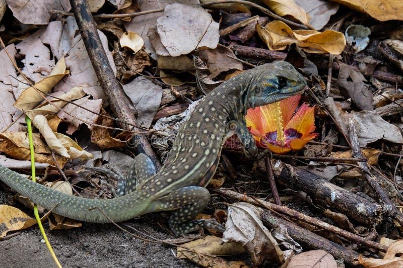 动物通配水族馆的蜥蜴 图库摄影