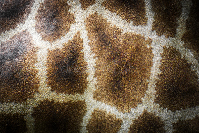 动物长颈鹿样式皮肤 库存照片