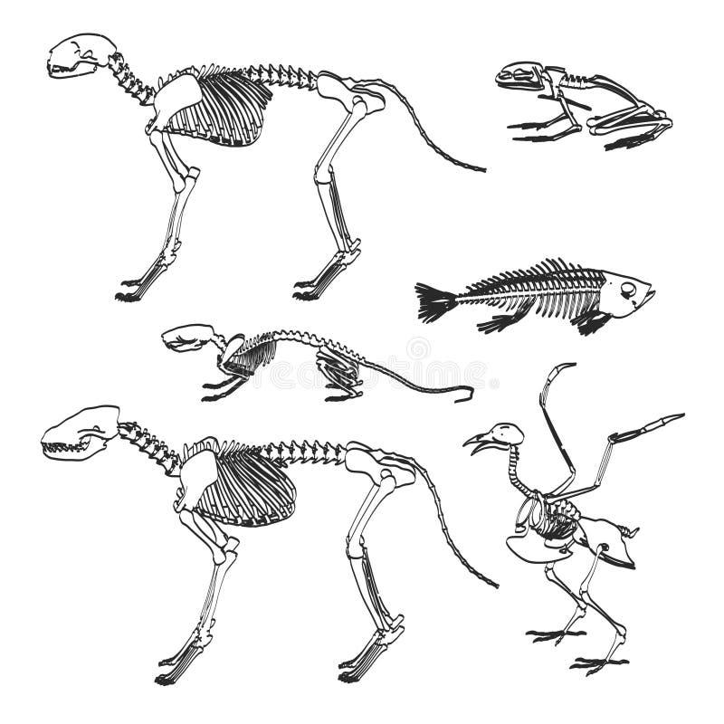 动物骨骼 库存例证