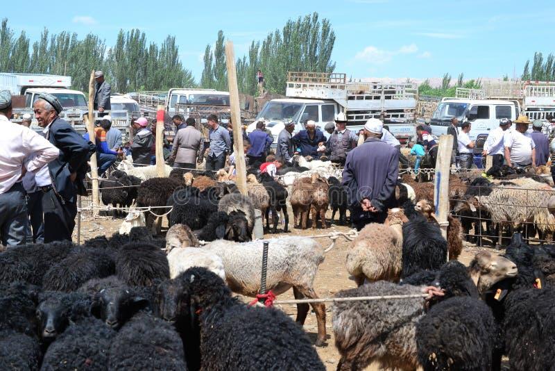 动物,绵羊,母牛在Uyghur星期天家畜义卖市场市场上在喀什,喀什,新疆,中国 免版税库存照片