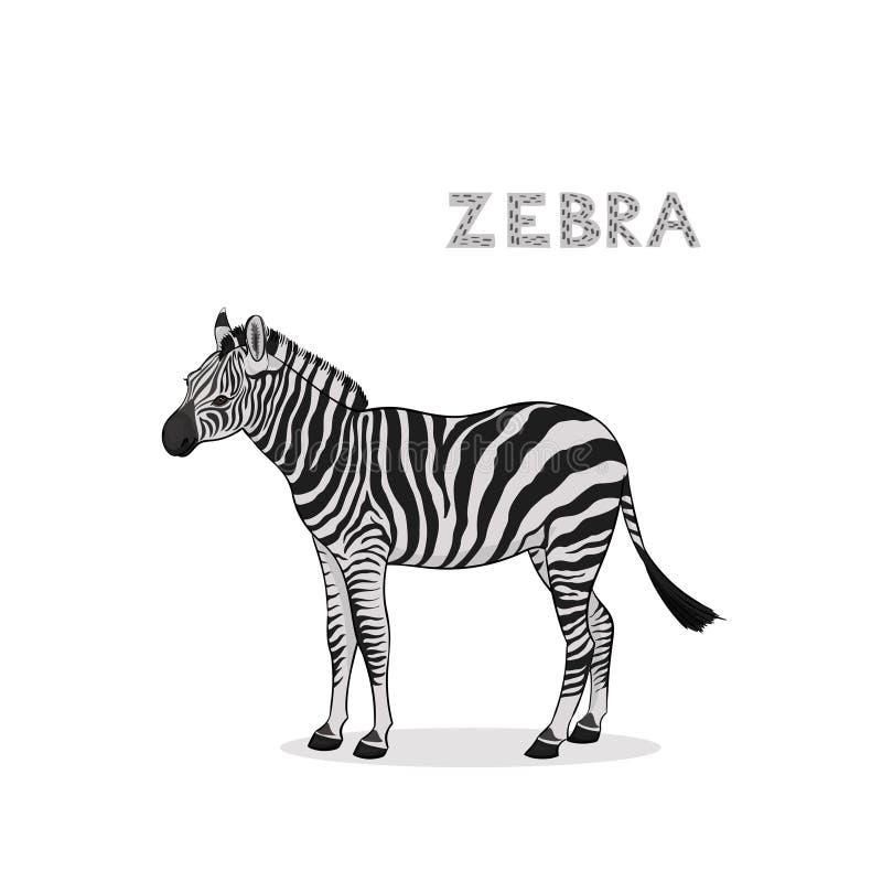 动画片斑马,隔绝在白色背景 r 库存例证