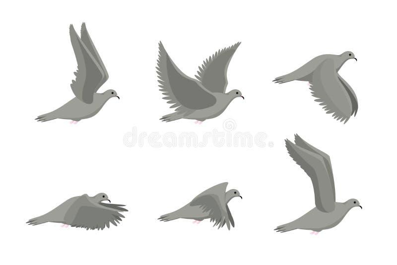 动画片灰色飞行斜向一边鸠鸟集合 向量 向量例证