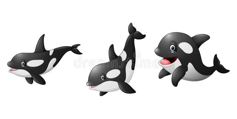动画片虎鲸例证colelctions 库存例证
