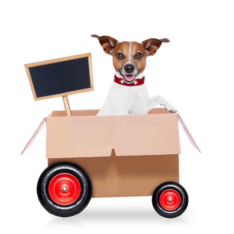 移动的箱子狗 库存照片
