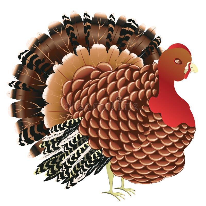 Download 动画片土耳其鸟 向量例证. 插画 包括有 敌意, 向量, 食物, 正餐, 季节性, 羽毛, 设计, 动画片 - 62533819