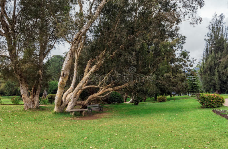 努沃勒埃利耶,斯里兰卡 女王维多利亚公园 免版税库存照片