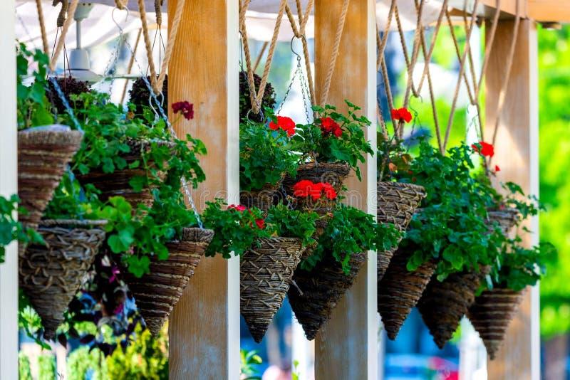 包含在舒适装饰的屋顶的垂悬的花盆行  免版税库存照片