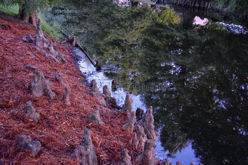 包围新奥尔良,包括反射水池的树和独特的自然方面看法在公墓和花园区 库存照片
