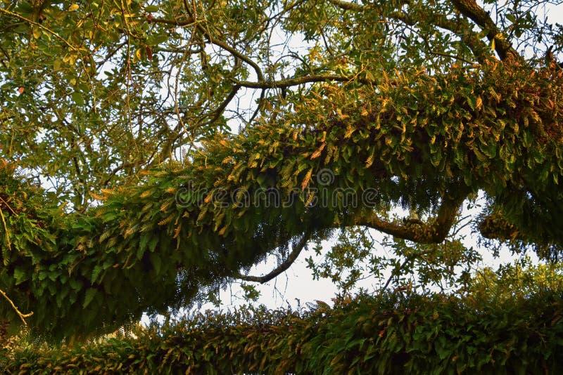包围新奥尔良,包括反射水池的树和独特的自然方面看法在公墓和花园区 免版税库存图片