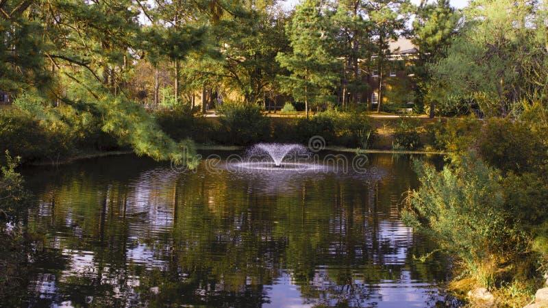 包围池塘的美丽的树在UNCW 免版税库存照片