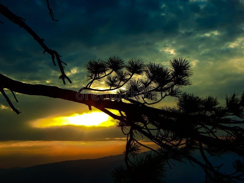 包括在山的朦胧的分支日落 库存照片