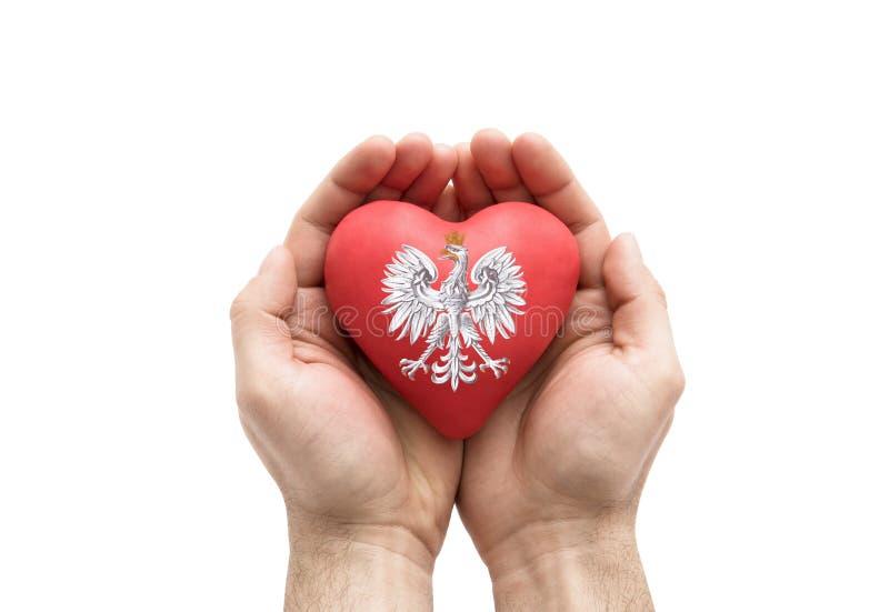 包括波兰徽章在红色心脏的手在白色背景 免版税库存照片