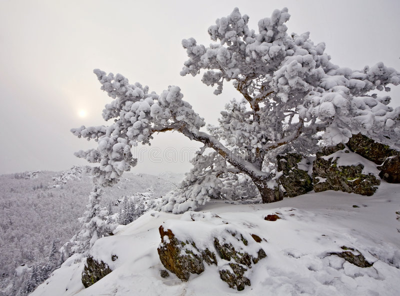 包括的岩石雪结构树 库存照片