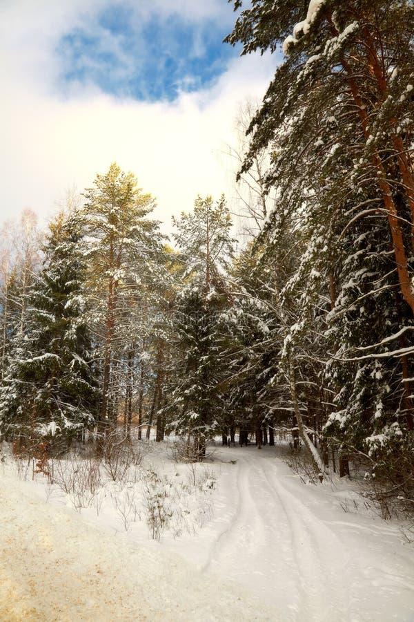 包括的森林附加费用路雪 库存图片