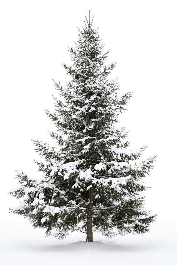 包括的毛皮雪结构树 库存图片
