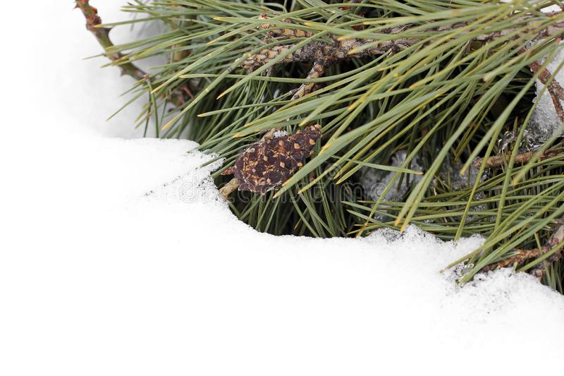 包括的雪云杉 针用雪盖 免版税库存照片