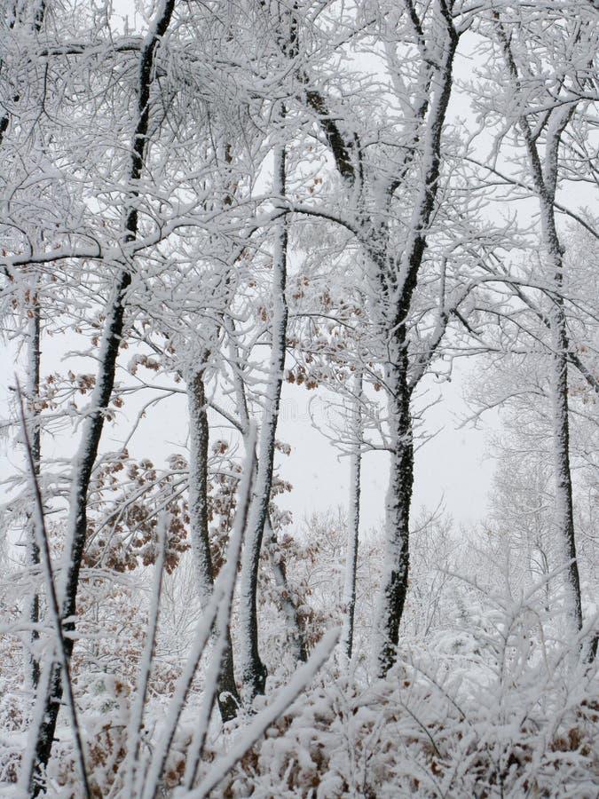 包括的雪森林 库存图片