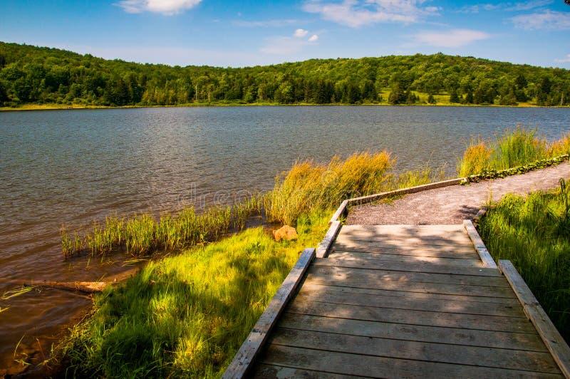 包围云杉的Knob湖,西维吉尼亚的木板走道足迹 免版税库存照片