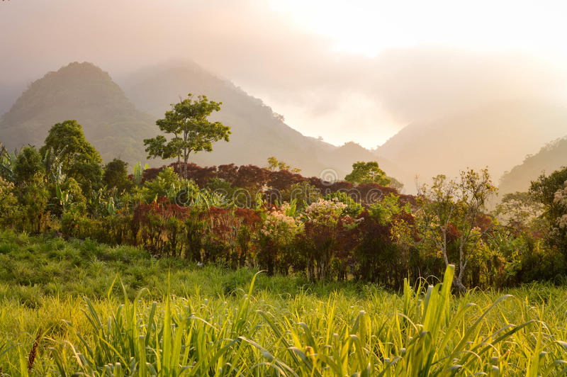 包围咖啡种植者的小村庄洪都拉斯的高地的有雾的风景 美国中央成象映射美国航空航天局 免版税库存照片