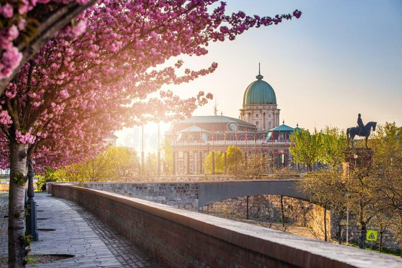 匈牙利布达佩斯 — 城堡区Arpad Toth长廊Toth Arpad街的美丽粉色樱桃树开花 库存照片