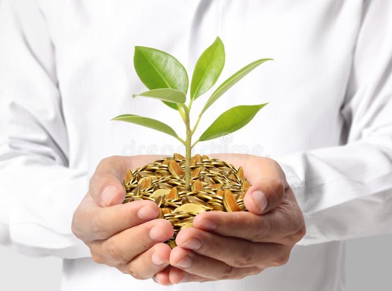 绿化事务的投资 库存照片