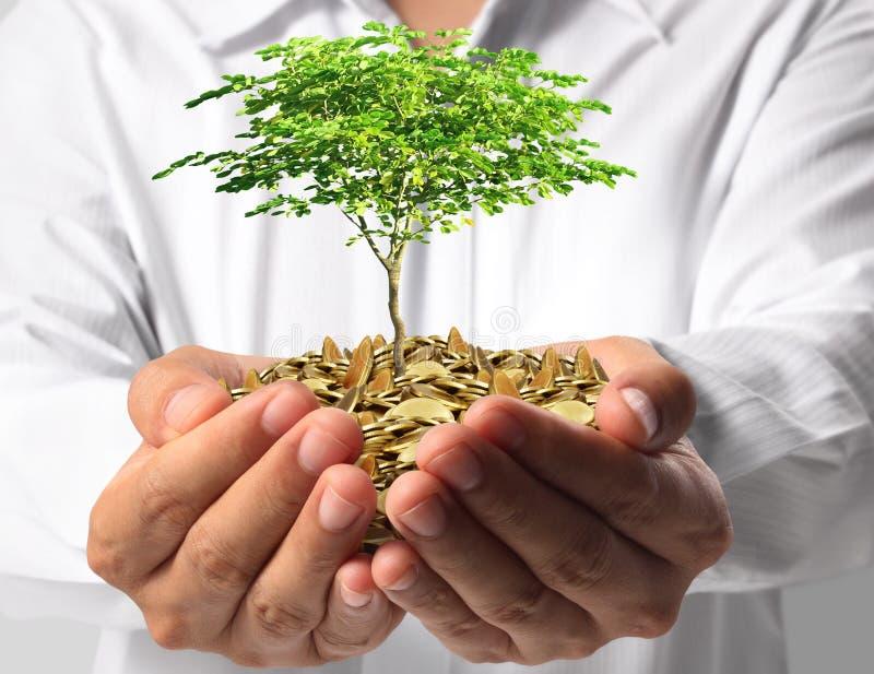 绿化事务的投资 免版税库存照片