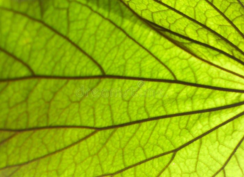 绿化叶子纹理 图库摄影