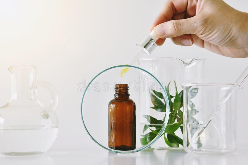 化妆棕色瓶容器和科学玻璃器皿,在滴下在烙记的大模型的空白的标签包裹的油的焦点 库存图片