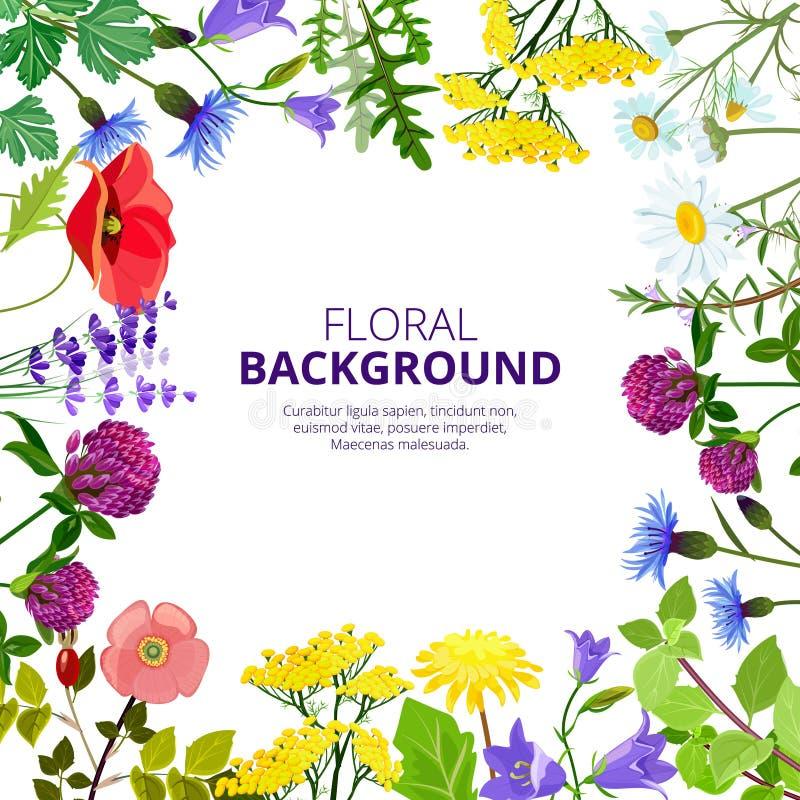 化妆用品草本 健康植物的花和清凉茶秀丽医学蜂蜜产品导航叶子图片 向量例证