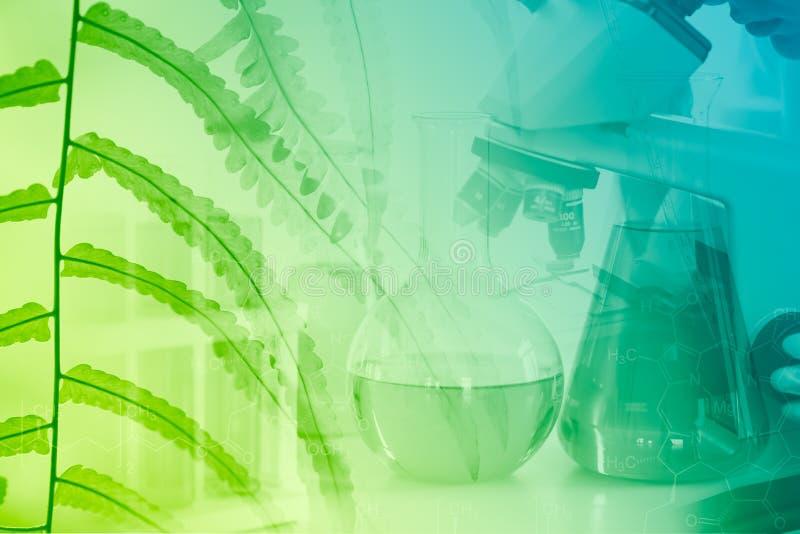 化学科学和绿色自然草本萃取物概念生物技术  免版税库存照片