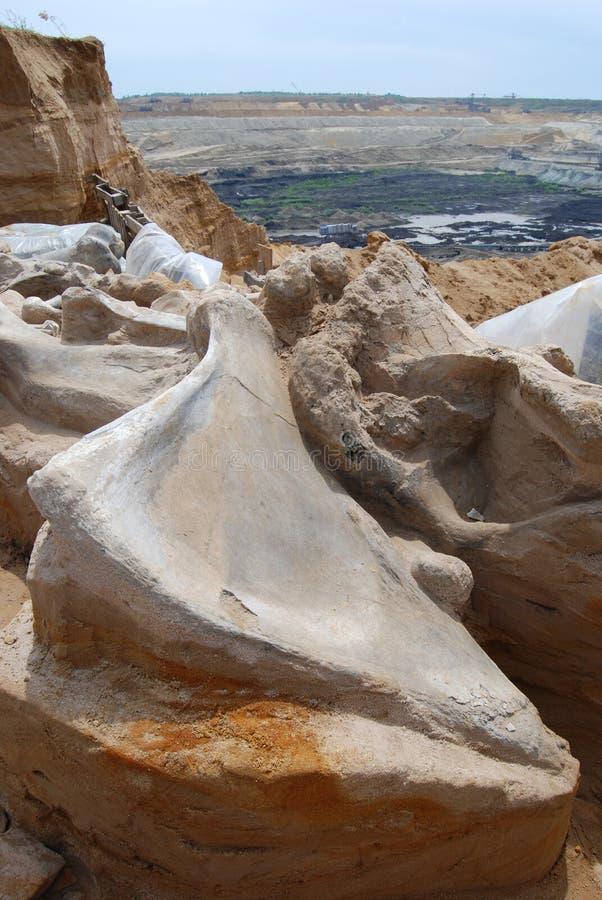 化石庞然大物 库存图片