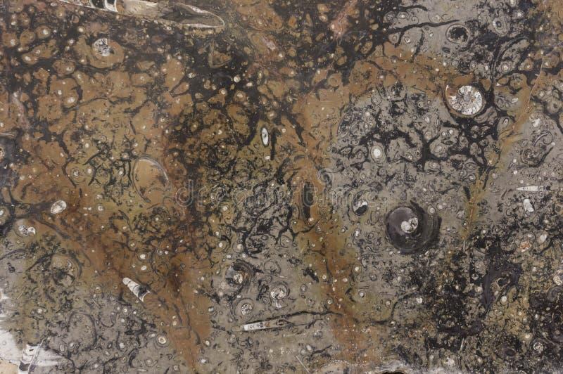 化石纹理 库存照片