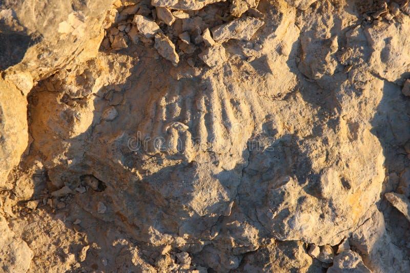 10化石 免版税图库摄影