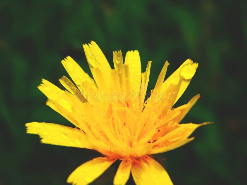 绿化黄色 免版税图库摄影