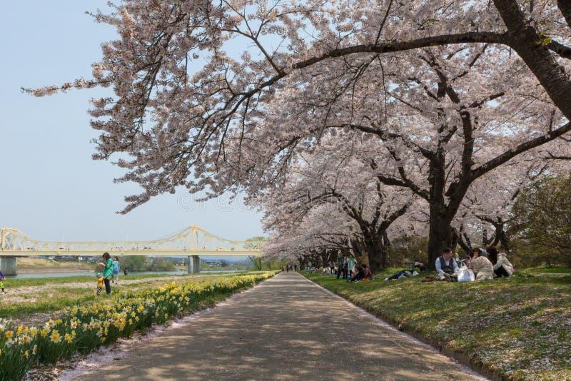北上河沿樱花或佐仓在日本 免版税库存图片