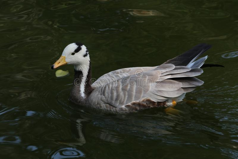 北京动物园 免版税库存图片