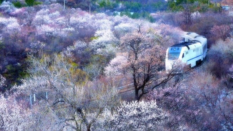 北京火车线S2通过花,暗藏的伟大的风景 库存照片