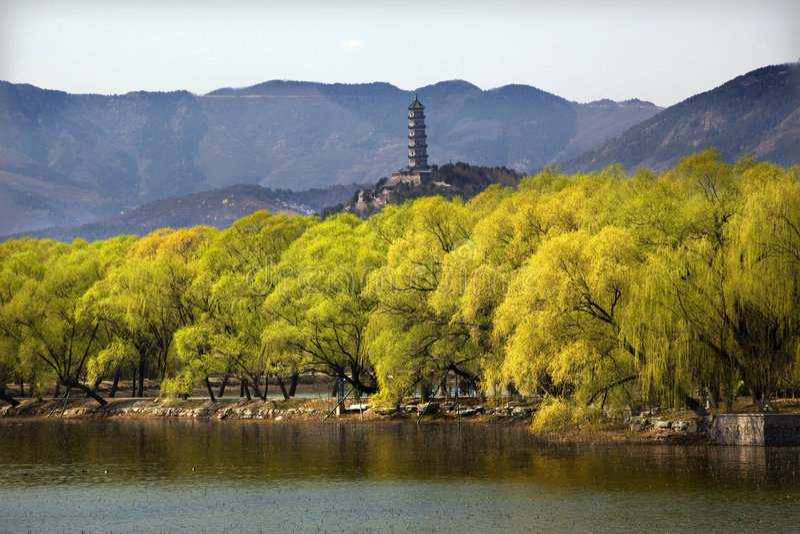 北京瓷feng塔宫殿夏天杨柳yu 免版税库存照片