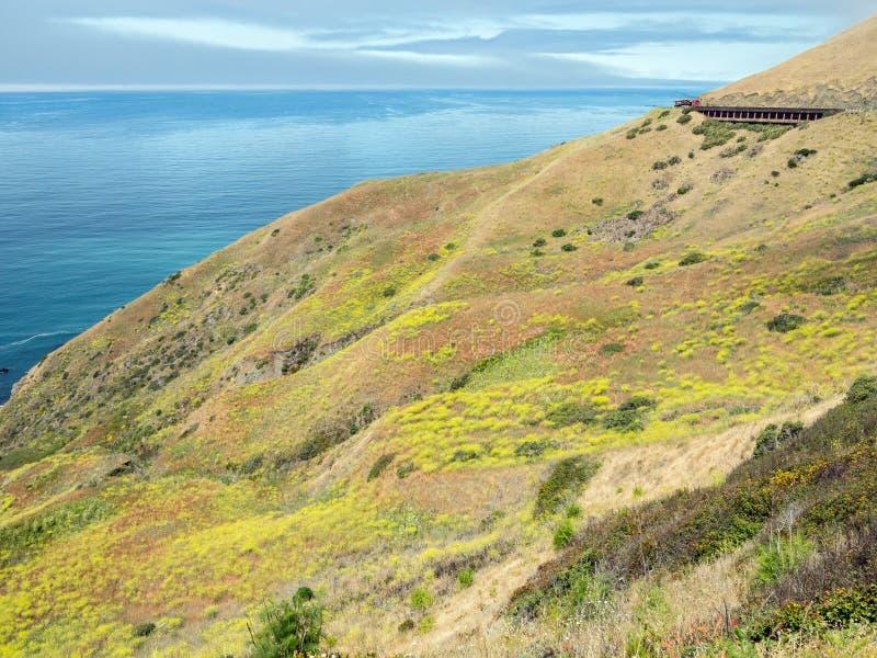 北加利福尼亚海岸线野花 库存照片