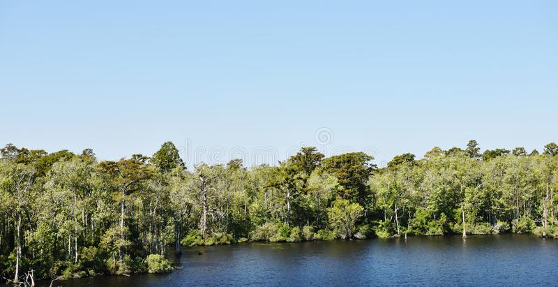北卡罗来纳美国外面银行厚实的树海岸 免版税图库摄影