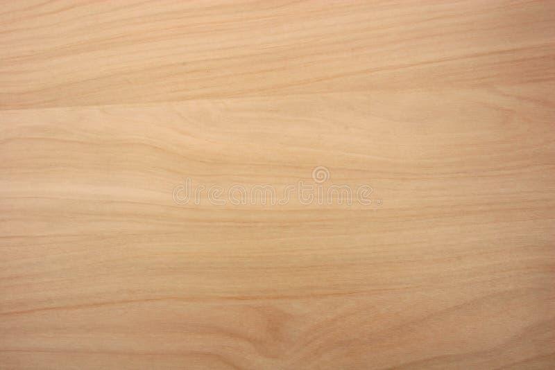 北方针叶林桦树木头五谷纹理 免版税库存照片