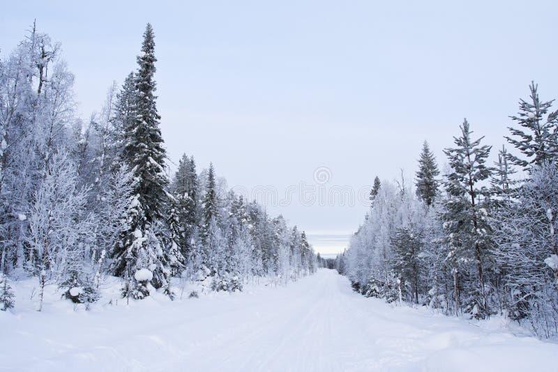 北方针叶林,库萨莫,芬兰 库存图片